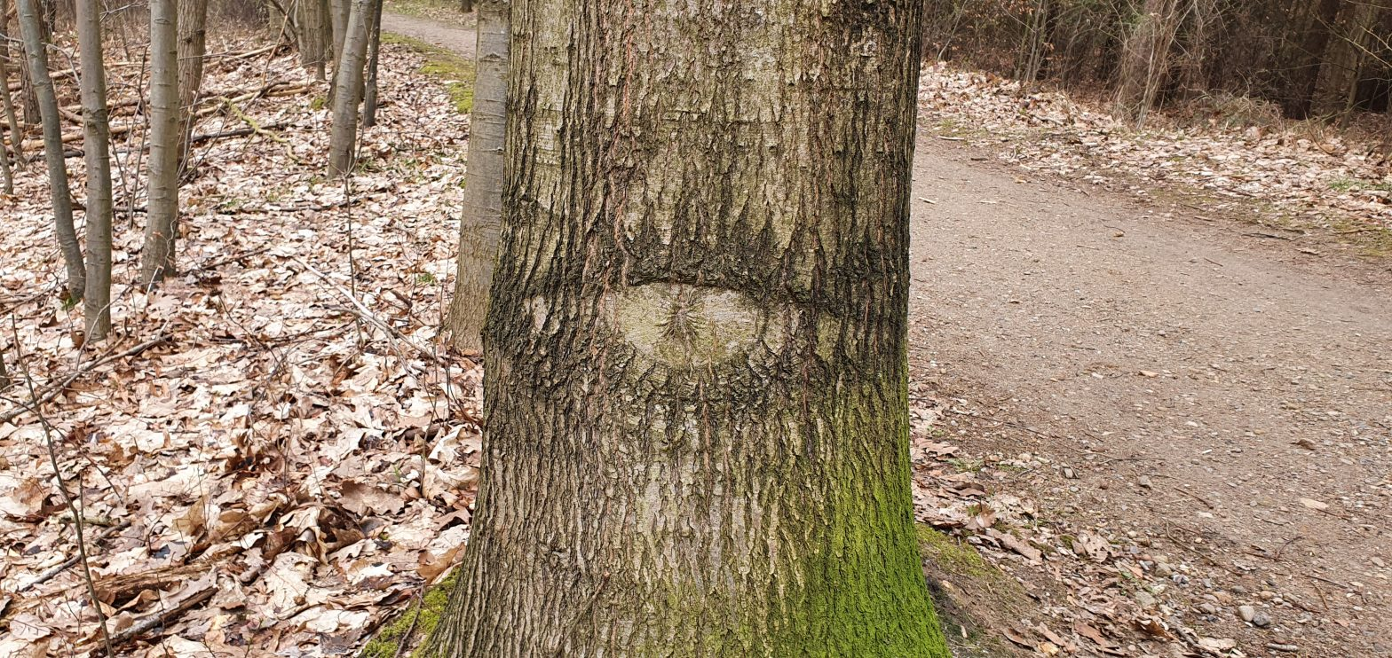 The Trees have Eys